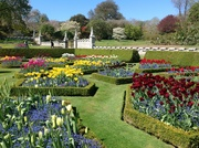 Tulip glory at Lanhydrock Cornwall