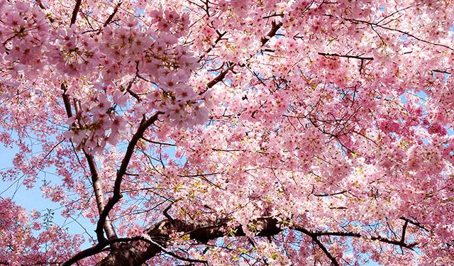 * De Primavera*