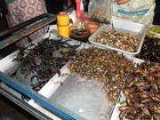 comidas exoticas da tailandia