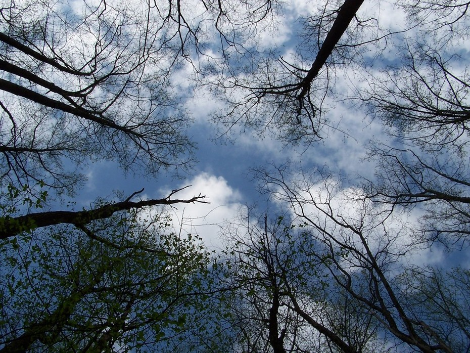 looking up from Low Gap Trail (15)