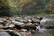 Upstream Little Pigeon River 0468