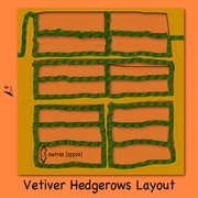 Vetiver Hedgerows Layout