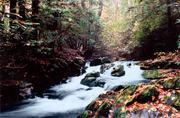 Wolf Creek -Lower End