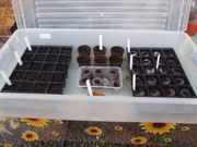 The Chili Greenhouse experiment