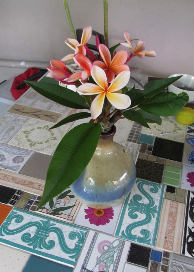 Frangipani -- first of the flowering