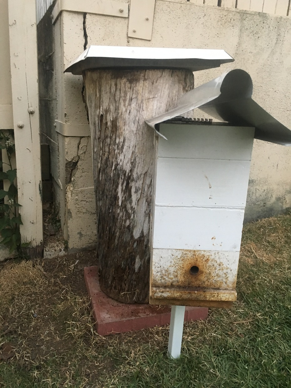 Native bee hive duplication