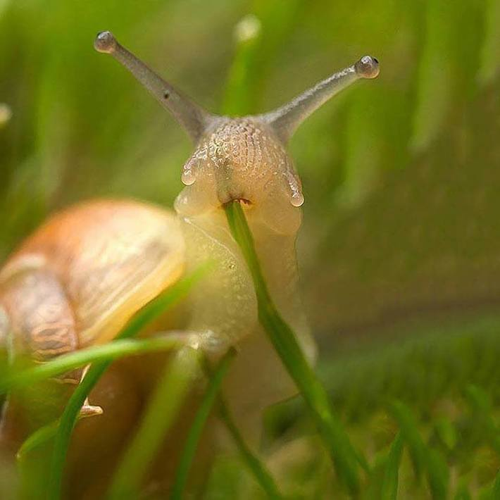 Snail Caught Munching