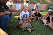 Hank & the Giant Tortoise!