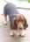 I love hound dogs!
