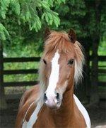 Zambra - My Passo mare