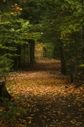 Dark Autumn Trail