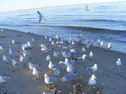The birds 010