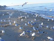 The birds 009