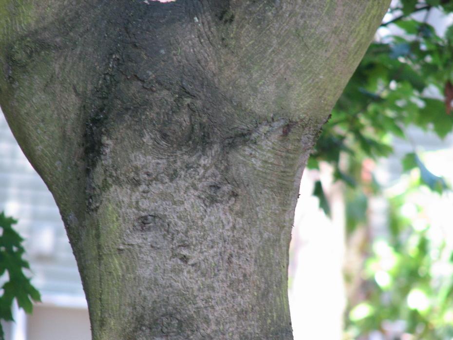 new face tree