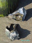 Two Shells