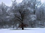 First Snow...12/29/12