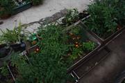 Peacemonger garden