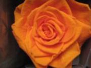 Flores Preservadas de Colombia FLORLICOL