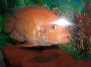 fish 044