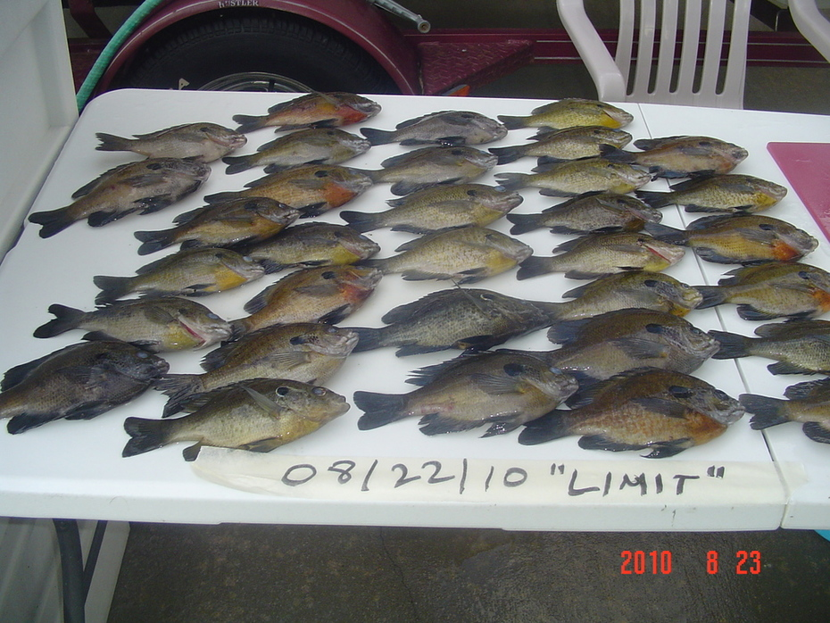 These fish were all on the bed.