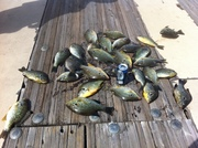 2 Dozen Redears and a couple of Gills