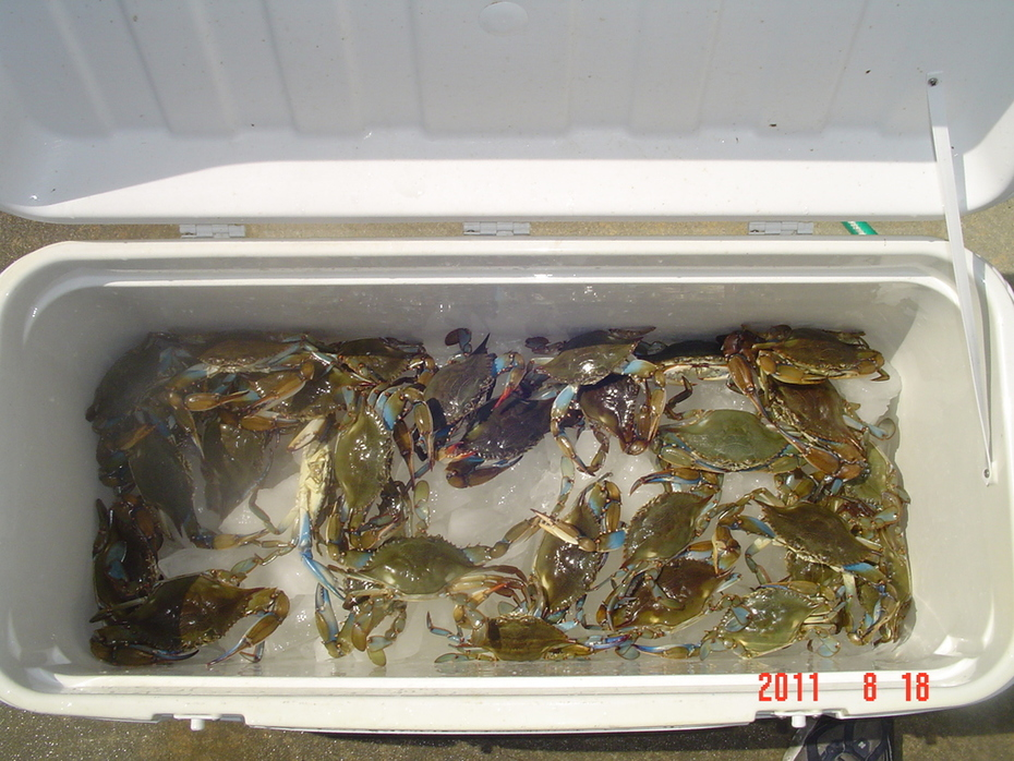 This is a shot of the larger Crabs from Thursday.