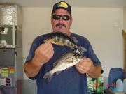 Wannabee Yellow Perch Anglers
