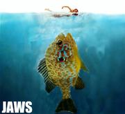 JAWS PUMPKINSEED