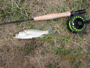 2nd fish caught with the 2WT