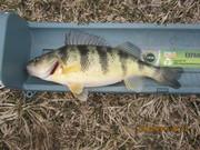 Tabberts pond 3-10-13 004