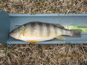 Tabberts pond 3-10-13 003
