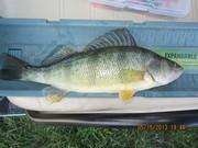 Tabbert pond 5-15-13 002