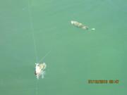 Vacation July 2013 Pinehill lake 044