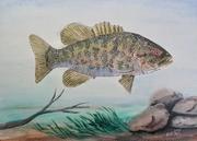 Smallmouth bass 001