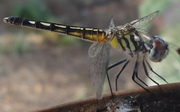 Dragon Fly(1)
