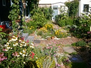 3 My garden Feb 09