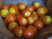Cherry Tomatoes in the Basket - '10