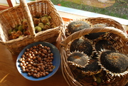 nuts and seeds from my garden