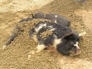 Gravel hogs