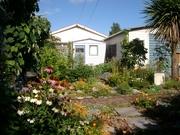 My garden February 2011