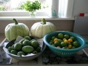 Surprise harvest.4.2011.jpeg 001