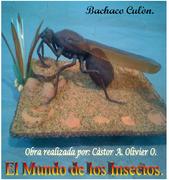 Bachaco Culòn.