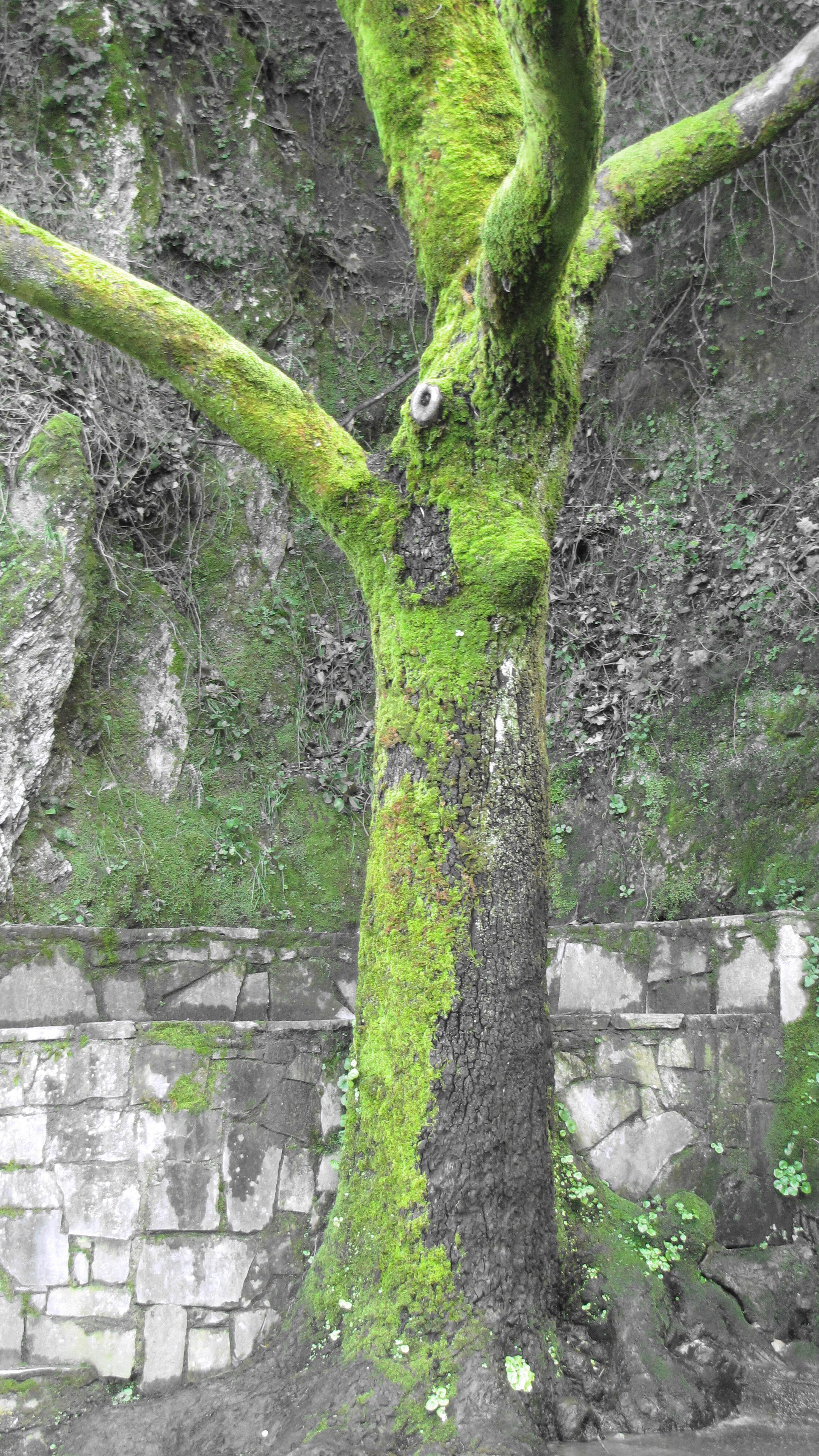 Green Tree!