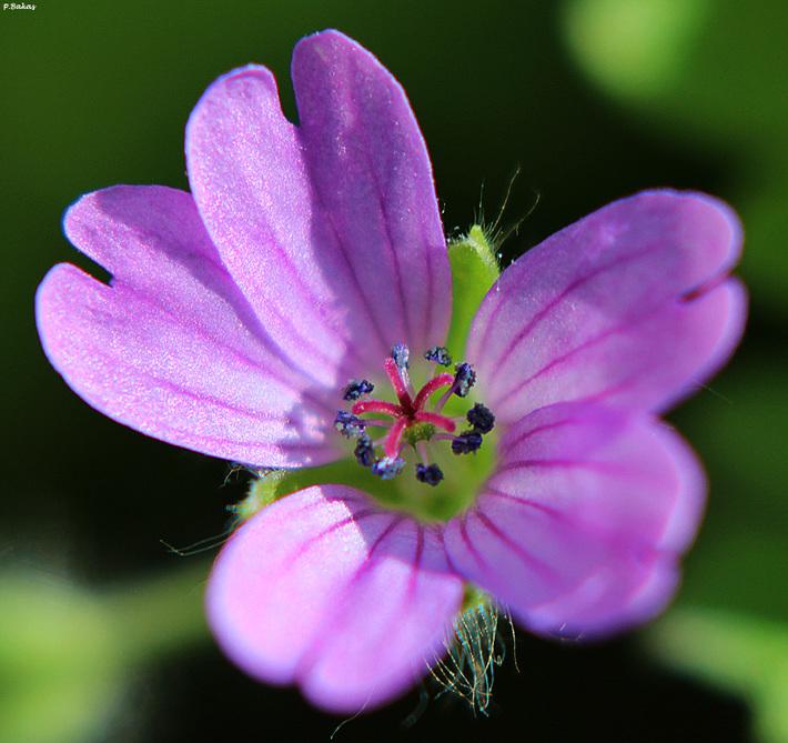 Macro λουλούδι