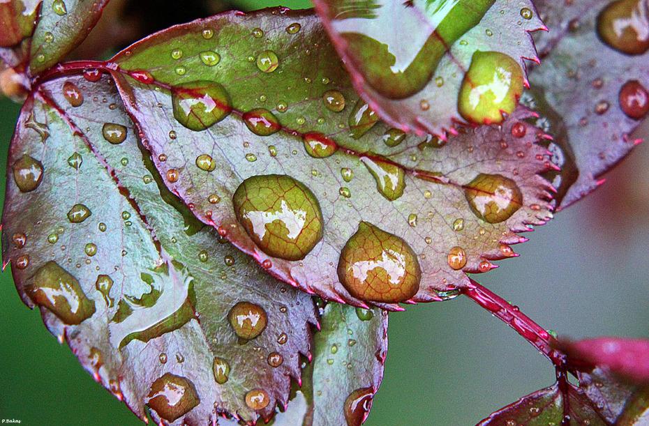 Rain drops #1