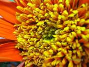 κεντρο λουλουδιου