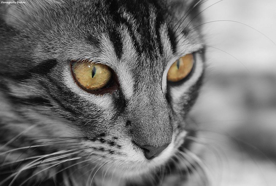Γατάκι #3