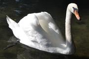 Λευκή ομορφιά