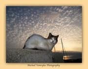 Οι γάτες του φάρου Αγίου Νικολάου