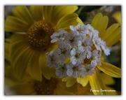 Ένα λουλουδάκι ..τόσο δα μικρό.
